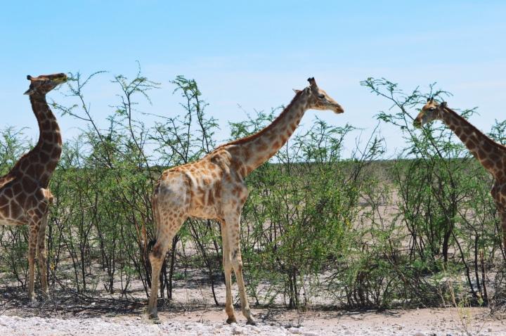 Namibia | Cruising Through the EndlessSavannas